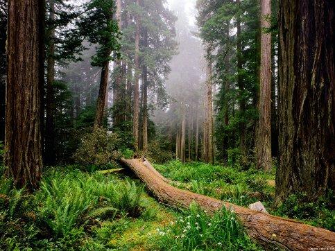 foresta_albero_caduto_N