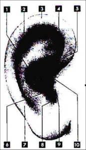 orecchio_esterno